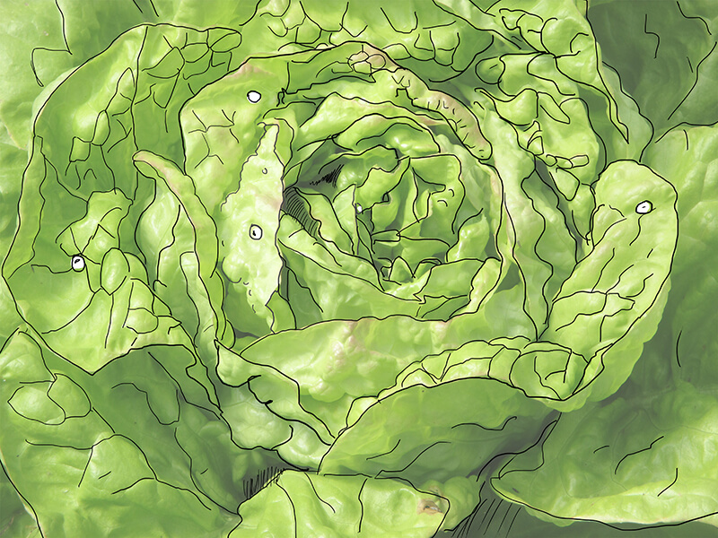 Ferme de La Berthe - Légumes